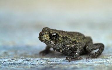 Dotkneš sa a zmeníš sa na žabu